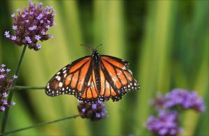 butterflywithbrokenwings