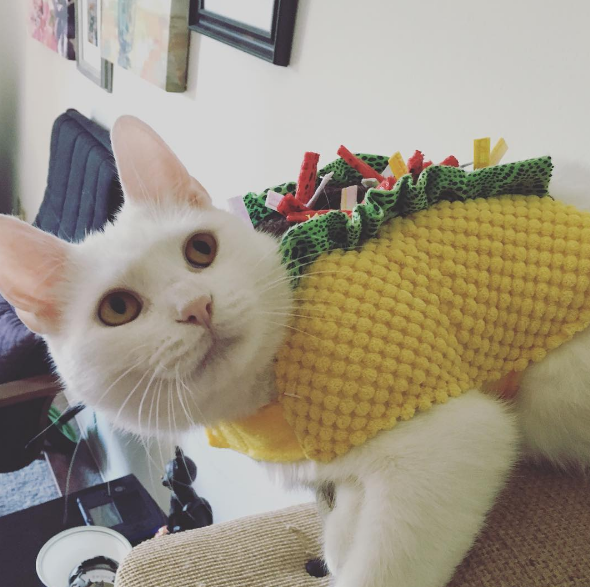 My cats' Halloween costumes